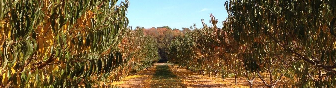 Barbee Farms | Concord, NC